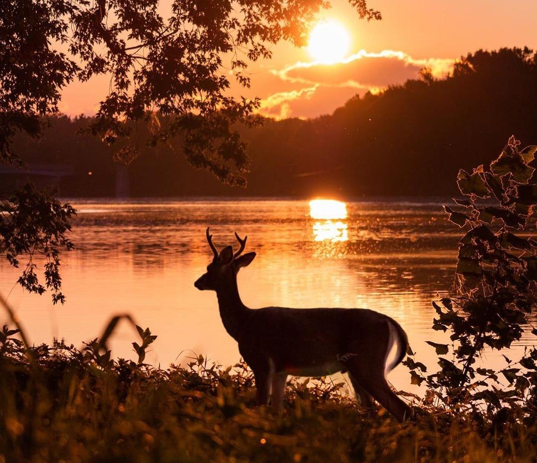 Красота природы и животных на снимках Логана Брауна