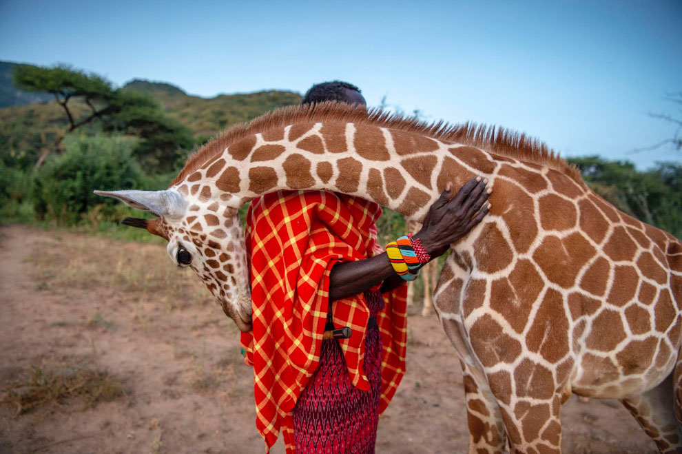 Лучшие снимки с конкурса BigPicture Natural World Photography 2020