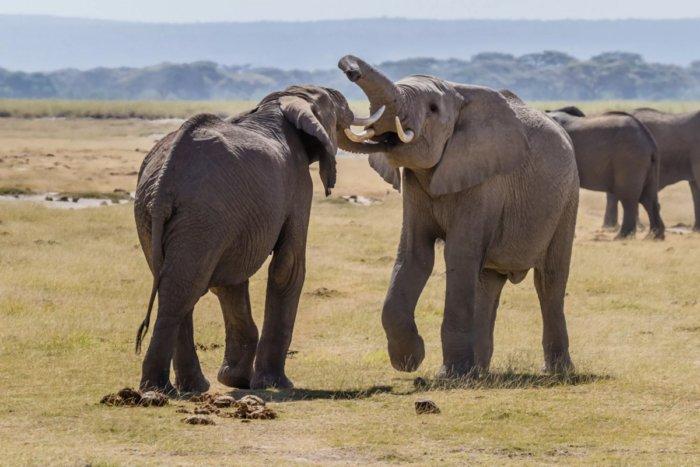 Называют ли животные друг друга по именам?
