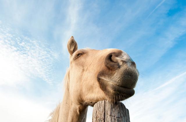 Почему лошади спят стоя, а не лежа?