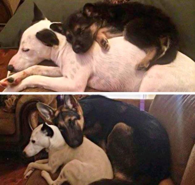 Повзрослевшие вместе животные и их хозяева на снимках