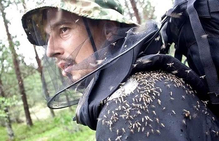 Проверенные способы защититься от комаров и мошек