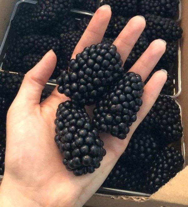 Размеры некоторых плодов познаются в сравнении