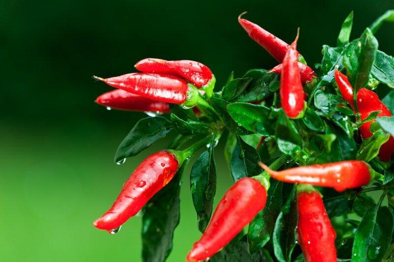 Вкусные и полезные растения, которые легко вырастить дома