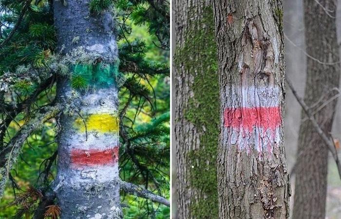 Зачем делаются отметки на деревьях в лесу