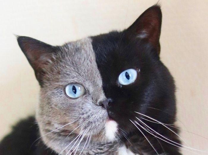 Кот с нестандартным окрасом и его потомство