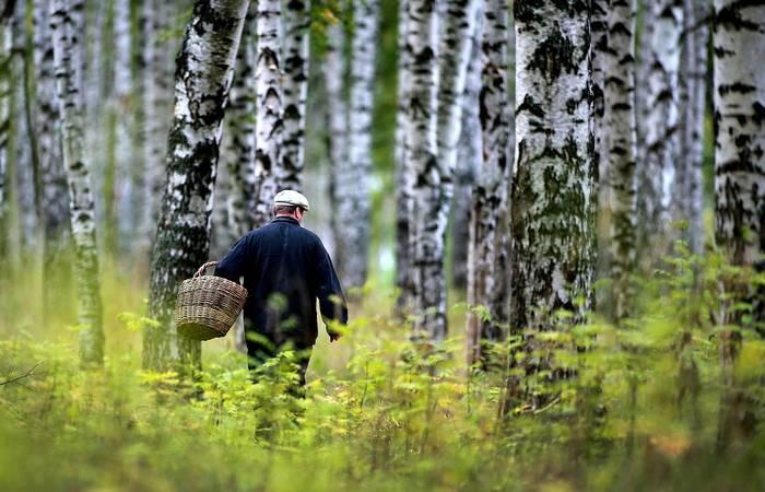Чего точно не стоит делать в лесу, если вы заблудились