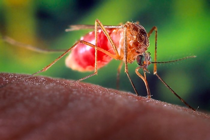 Из-за чего комариные укусы чешутся
