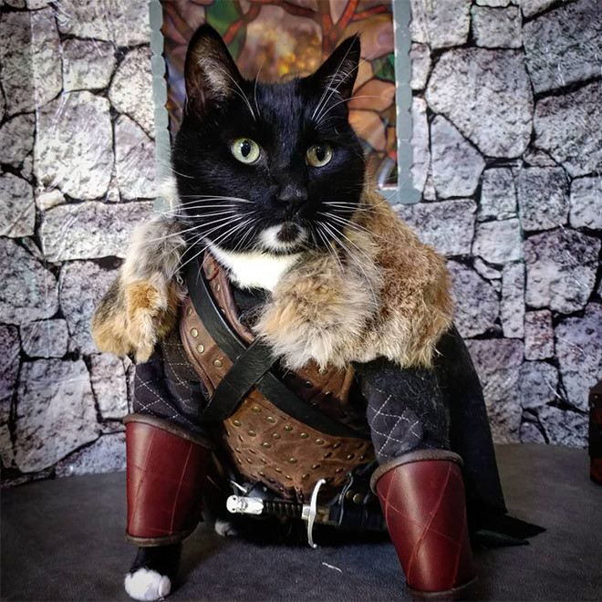 Котики, которые не обходятся без боевой брони