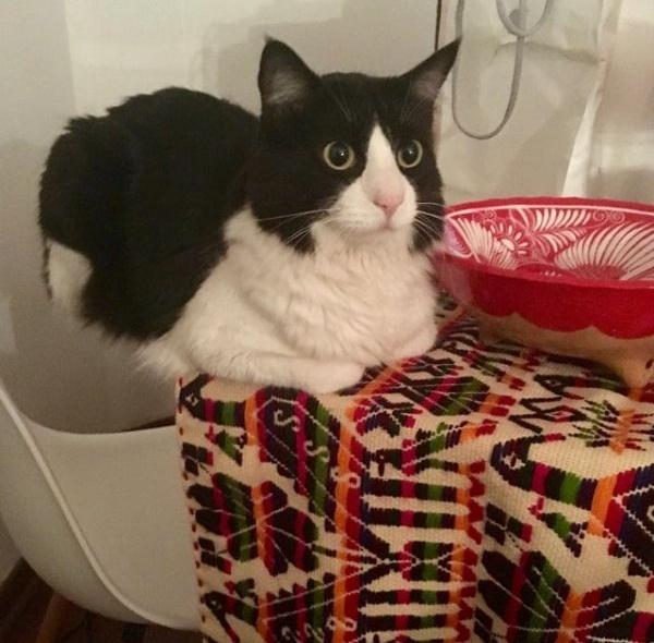Котики, над которыми не властны физические законы