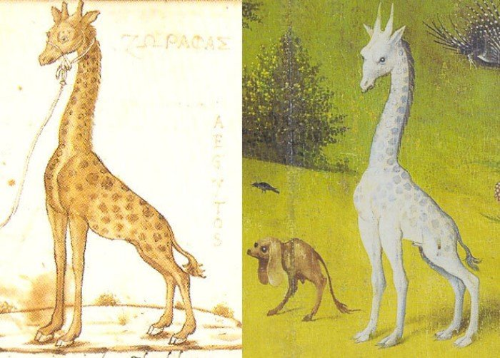 Мифические животные, которые оказались настоящими