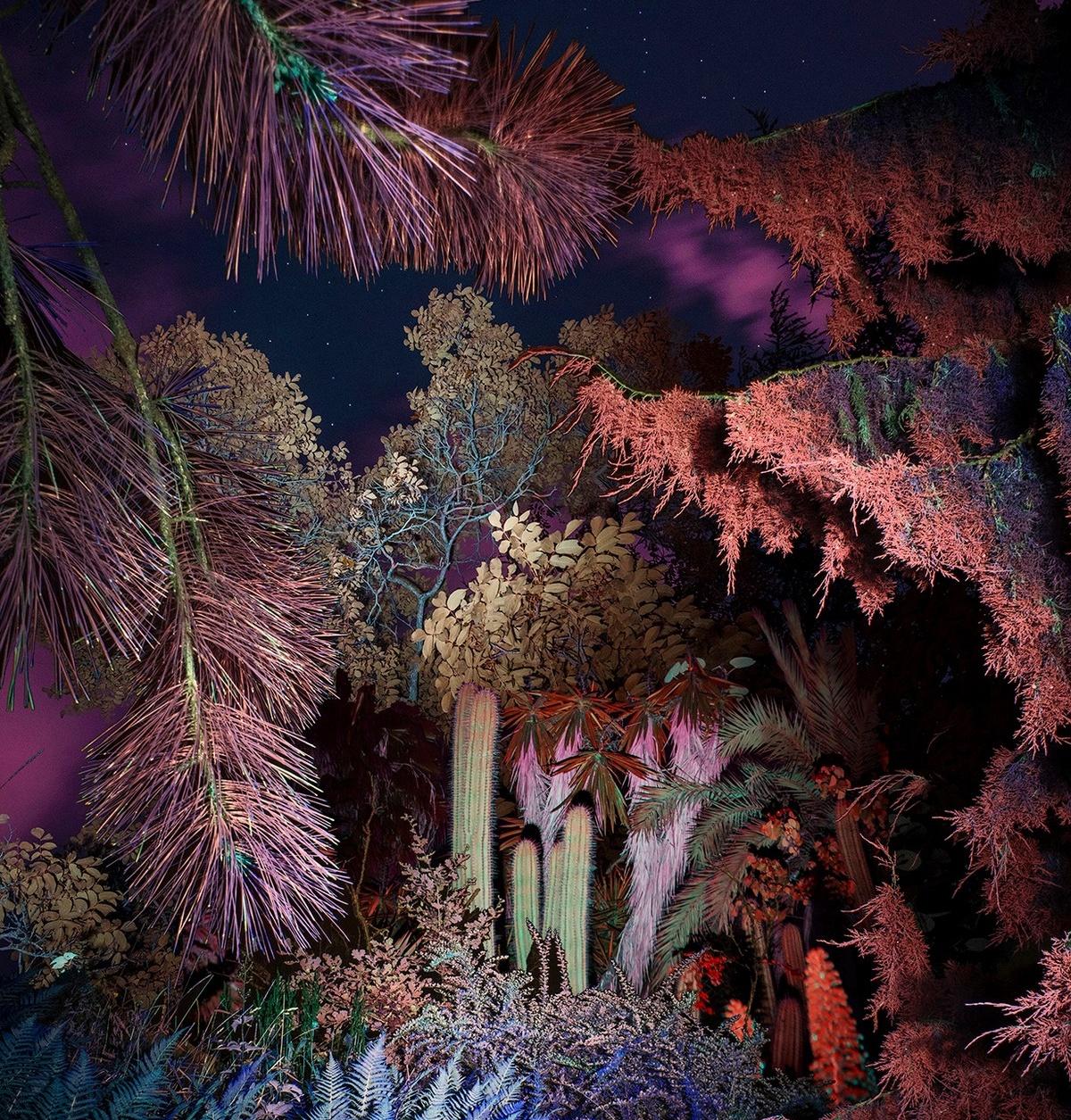 Ночные растения и деревья на снимках Линды Вестин