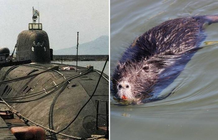 Откуда брались крысы на советских субмаринах и как с ними боролись