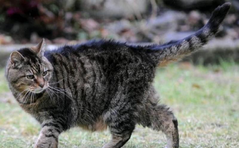 Самые старые коты и кошки нашей планеты