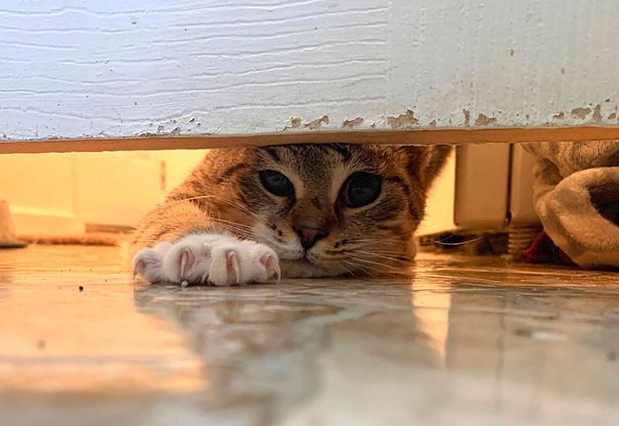 Этим котикам плевать на личное пространство хозяев