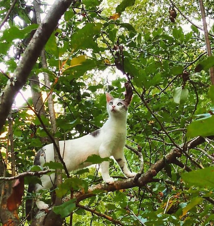 Котики, которые просто обожают сидеть на деревьях