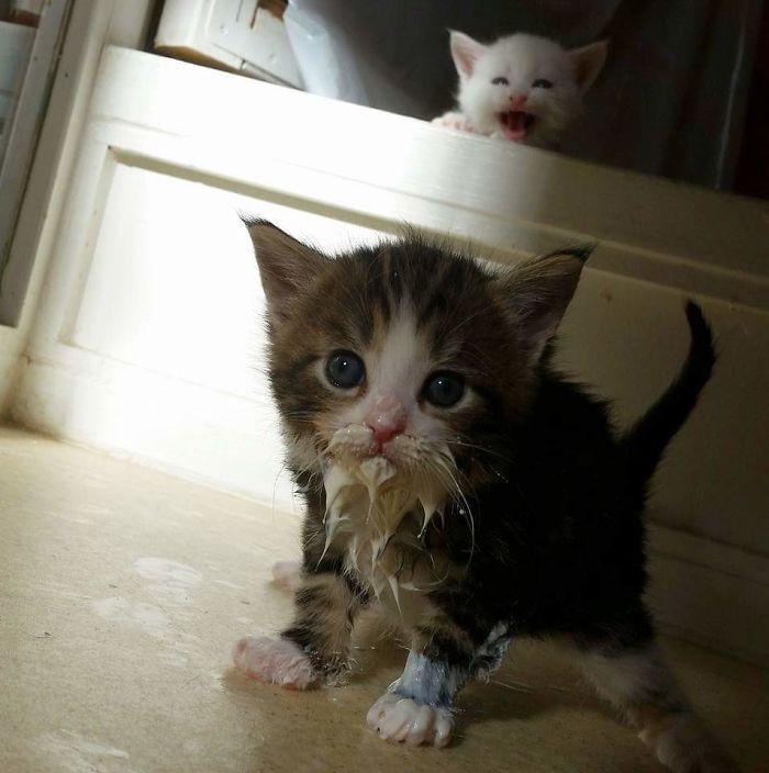 Милые испачканные едой мордочки котят и котиков