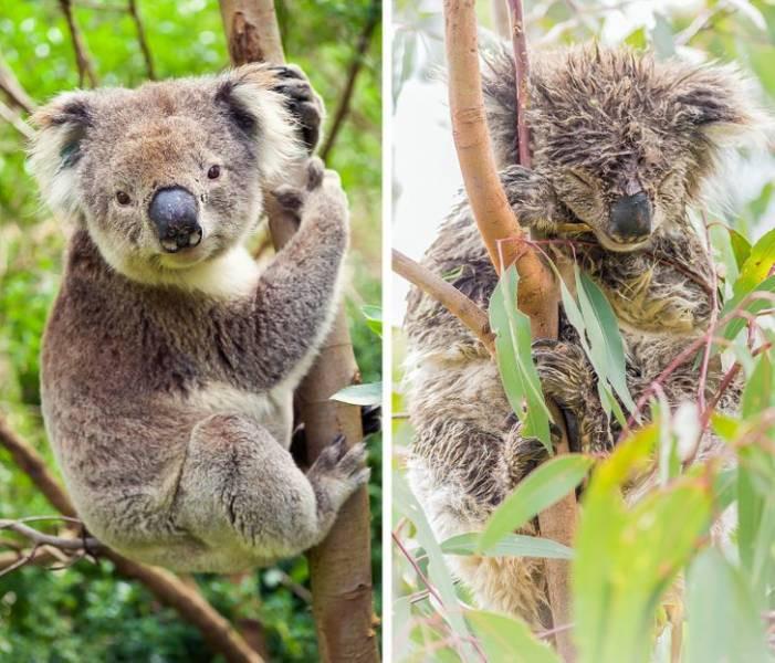 Милые животные на снимках до и после водных процедур