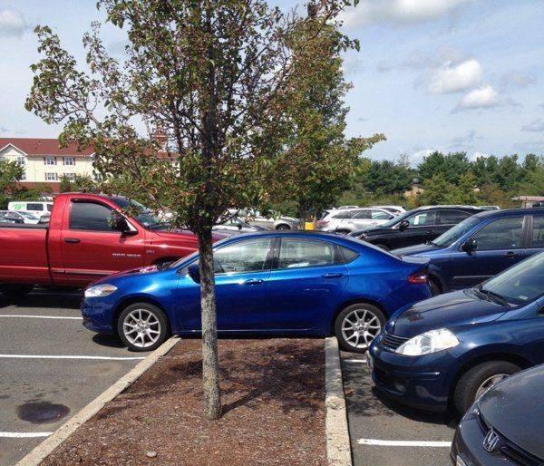Не всем подвластно мастерство парковки