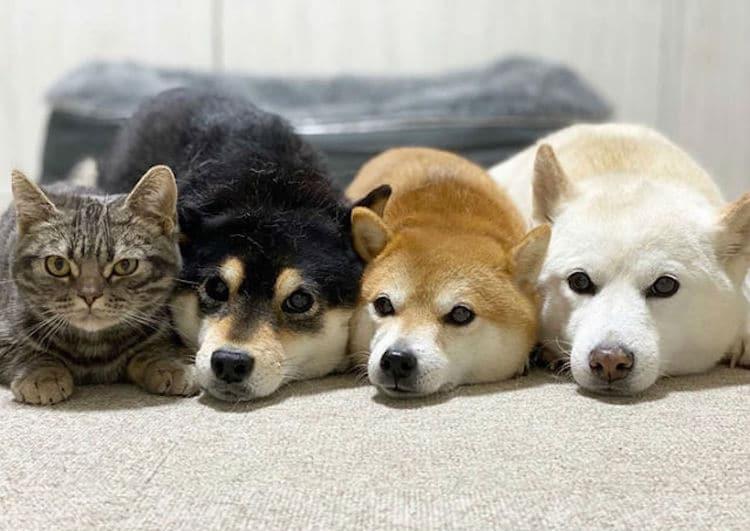 Очаровательная кошка Кики думает, что она собака
