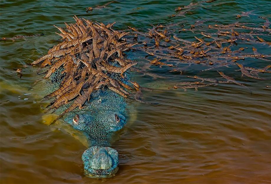 Победители фотоконкурса Wildlife Photographer of The Year 2020