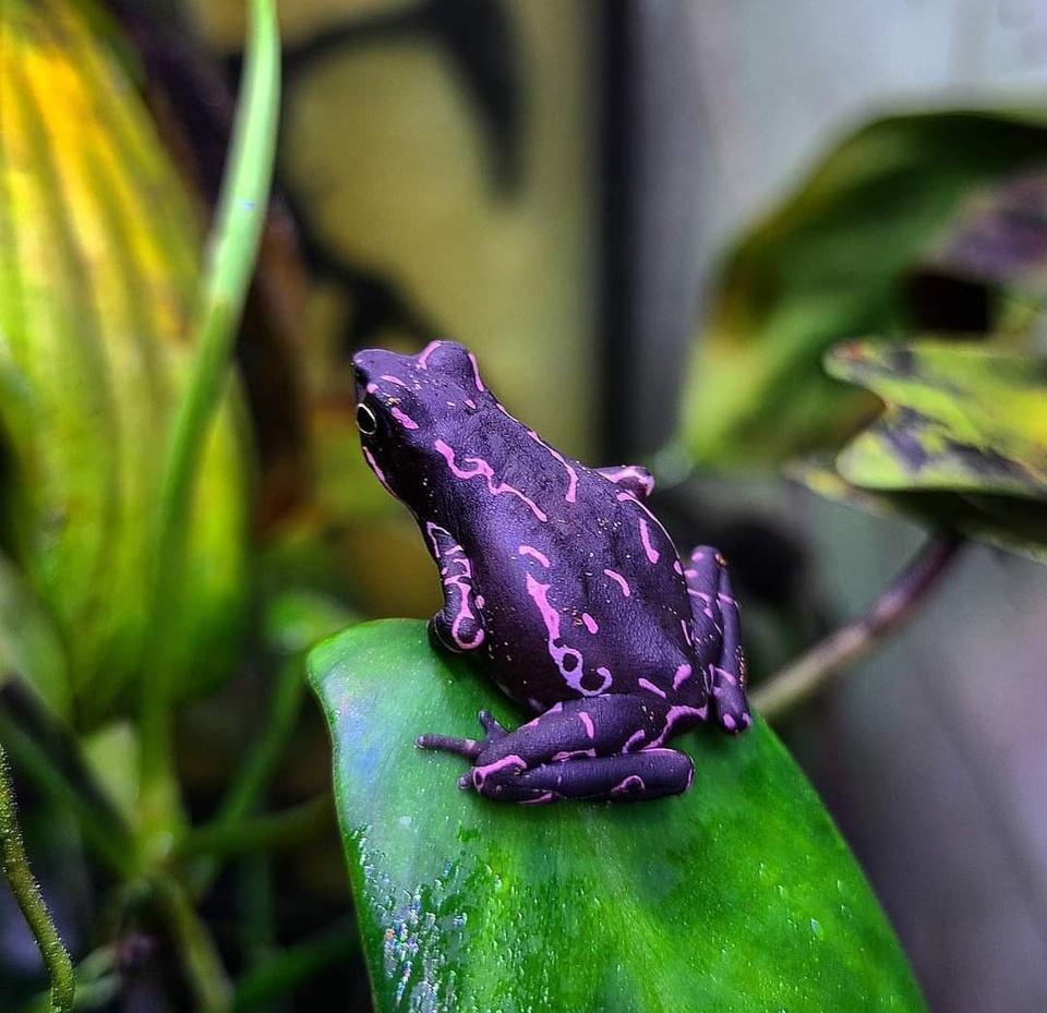 Животные с максимально необычным окрасом