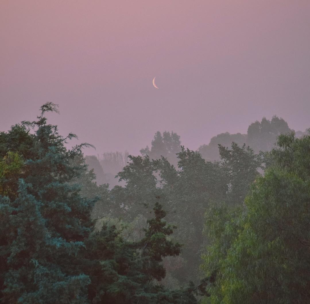 Фантастические миры на заднем дворе от Матиаса Алонсо Ревелли