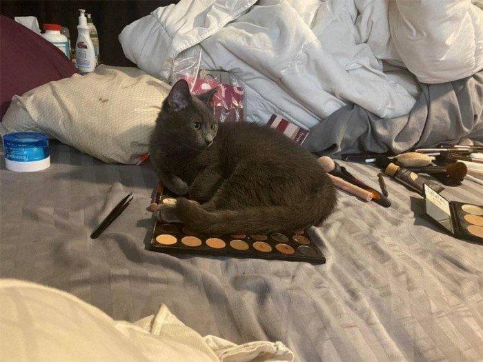 Котики, которые живут в своем мире и по своим правилам