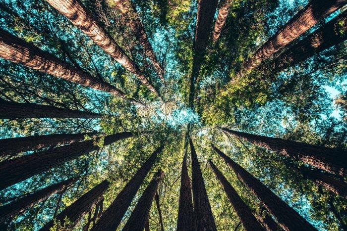 Почему деревья не растут бесконечно высоко