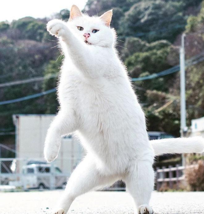 Снимки котиков-ниндзя от японца Хисаката Хироюки