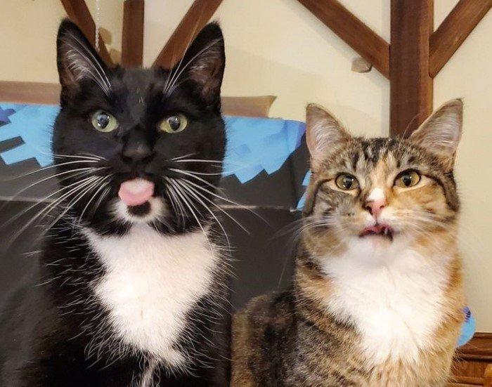Они пытались сделать милый снимок своего кота и потерпели фиаско