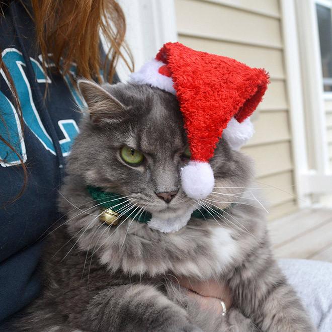Домашние питомцы, которые явно не любят Рождество