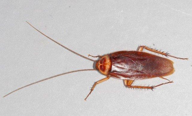 Какую роль играют тараканы в природе?