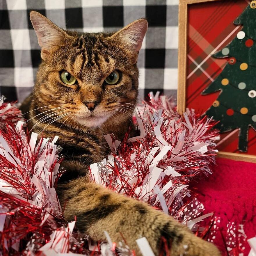 Кот с максимально сердитой мордахой имеет мягкое и пушистое сердце