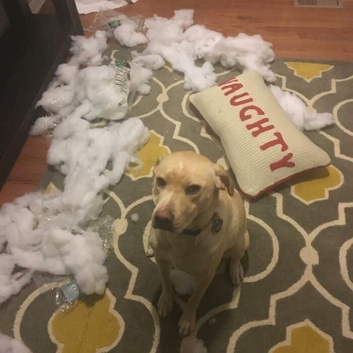 Пёсики попались прямо на месте преступления