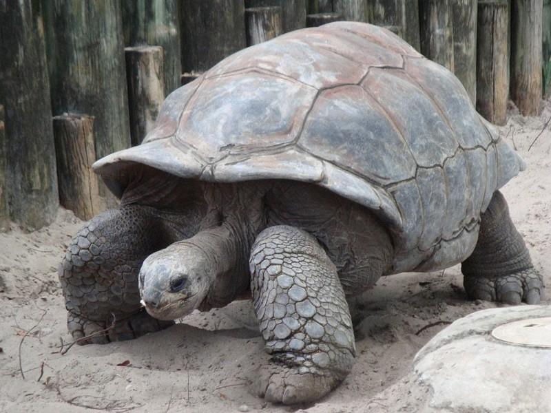Самые старые черепахи в мире, попавшие в Книгу Рекордов