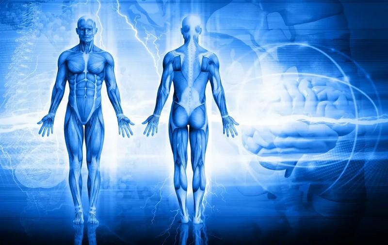 Забавные и увлекательные факты о человеческом теле