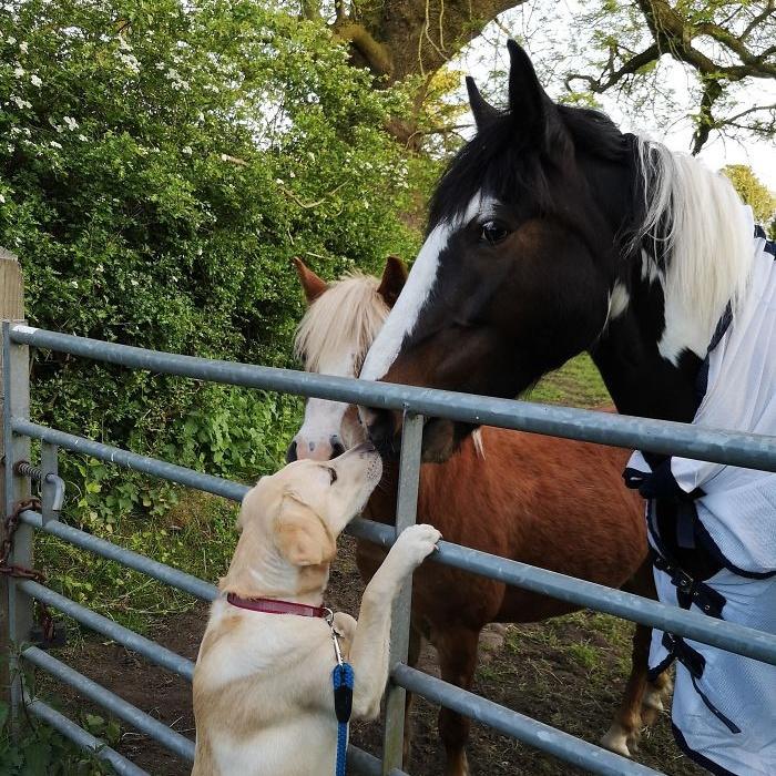 Дружба между разными животными на снимках, которые растопят ваше сердце