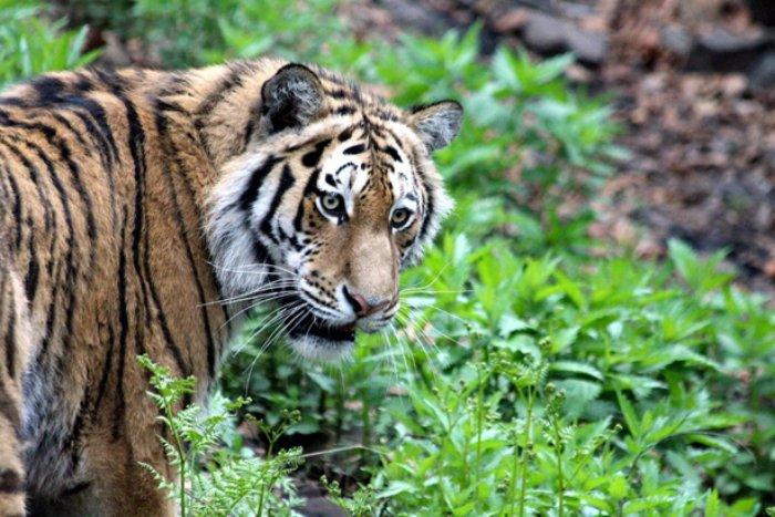Известные виды животных, которые могут исчезнуть в ближайшем будущем