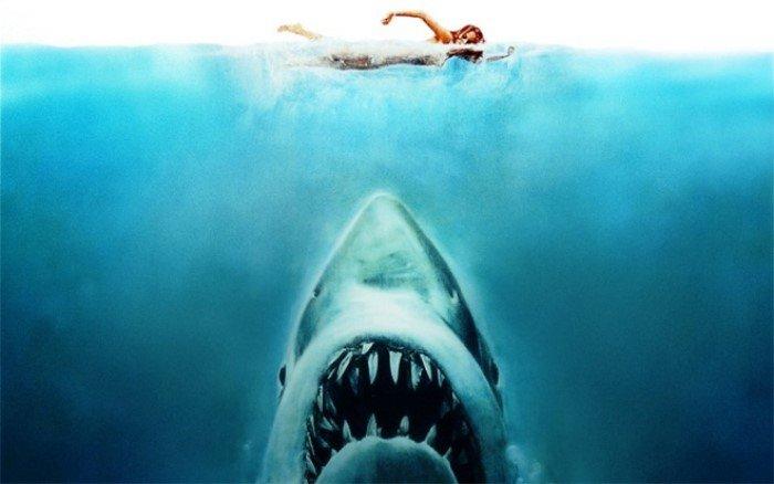Как можно отбиться от акулы в море