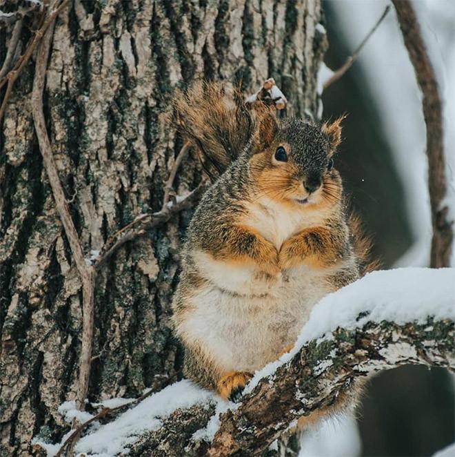 Прекрасные пышные белочки набрали массу зимой
