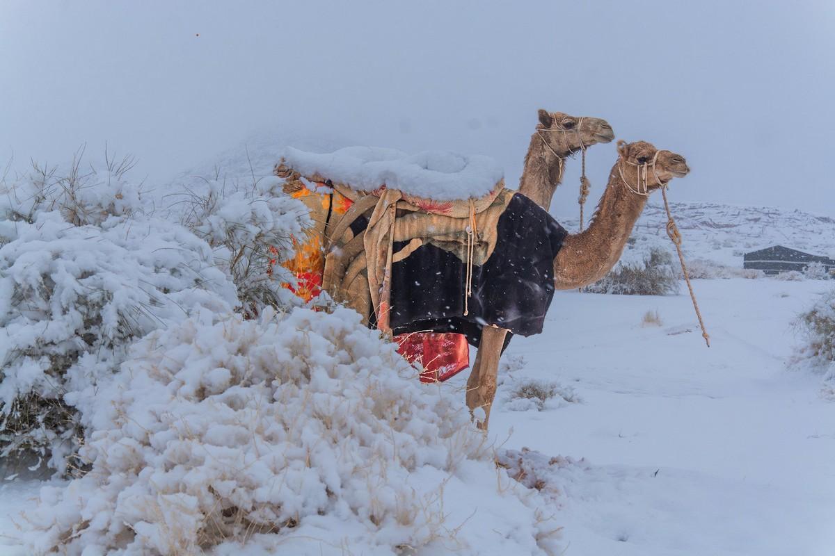 Снег выпал в пустыне Сахара и в Саудовской Аравии