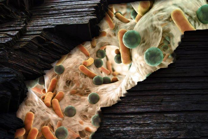 Где живут микробы: самые грязные места в вашем доме