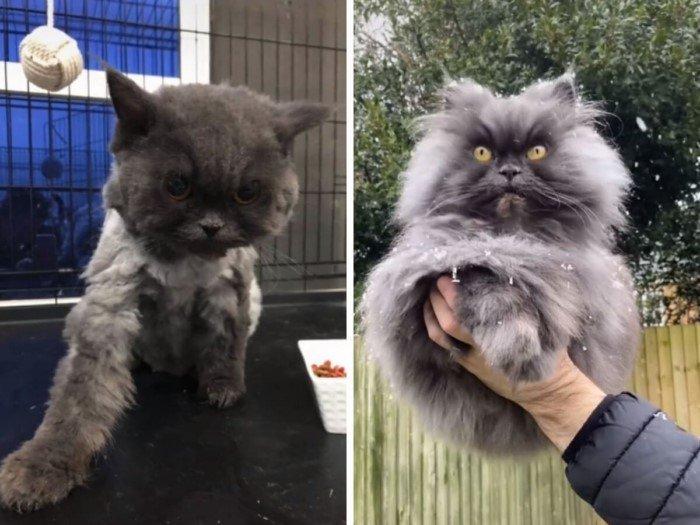 Котики из приютов: до и после обретения семьи