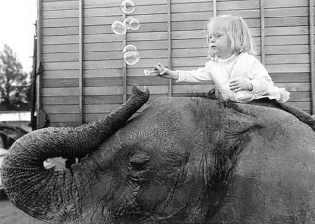 Маленькая девочка и её друг слон на старых снимках