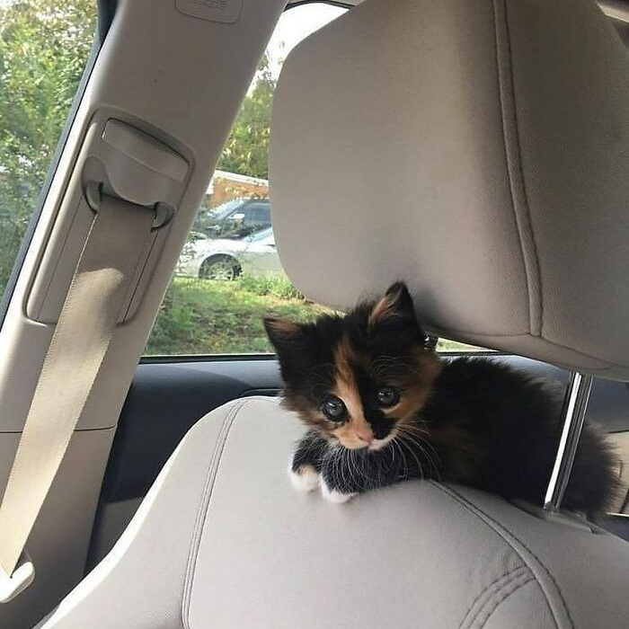 Милые малыши-котята растопят ваше сердце