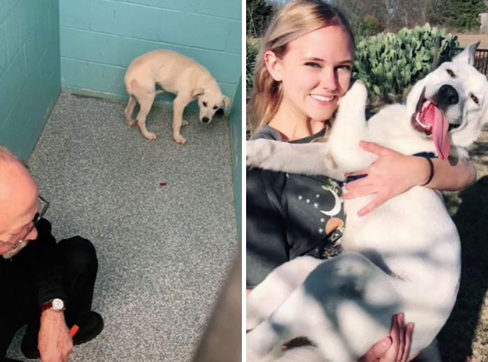 Милые пёсики на снимках до и после того, как нашли себе любящий дом