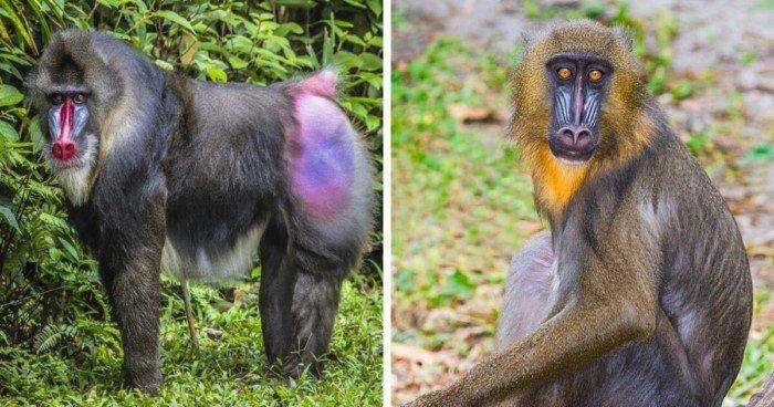 Самка и самец: половые различия у разных животных