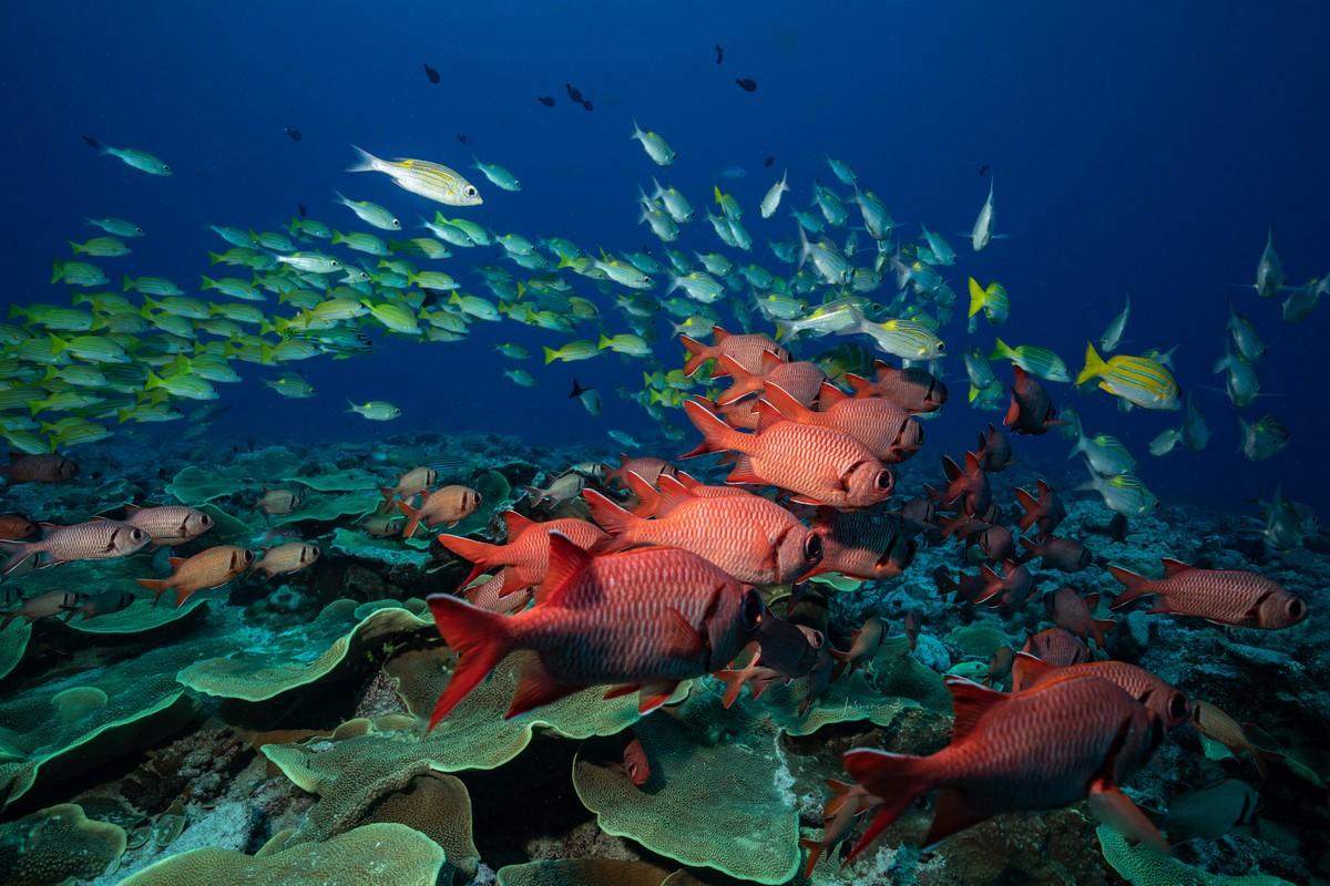 Снимки подводного мира от Жасмин Кэри