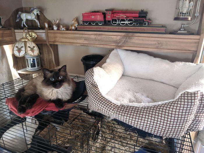 Странная кошачья логика и удобные лежаки